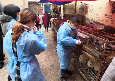 市、县疾控联合开展2018-2019年度职业 暴露人群血清学和环境高致病性禽流感监测